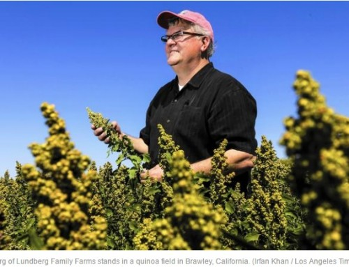Is quinoa California farmers' new kale?